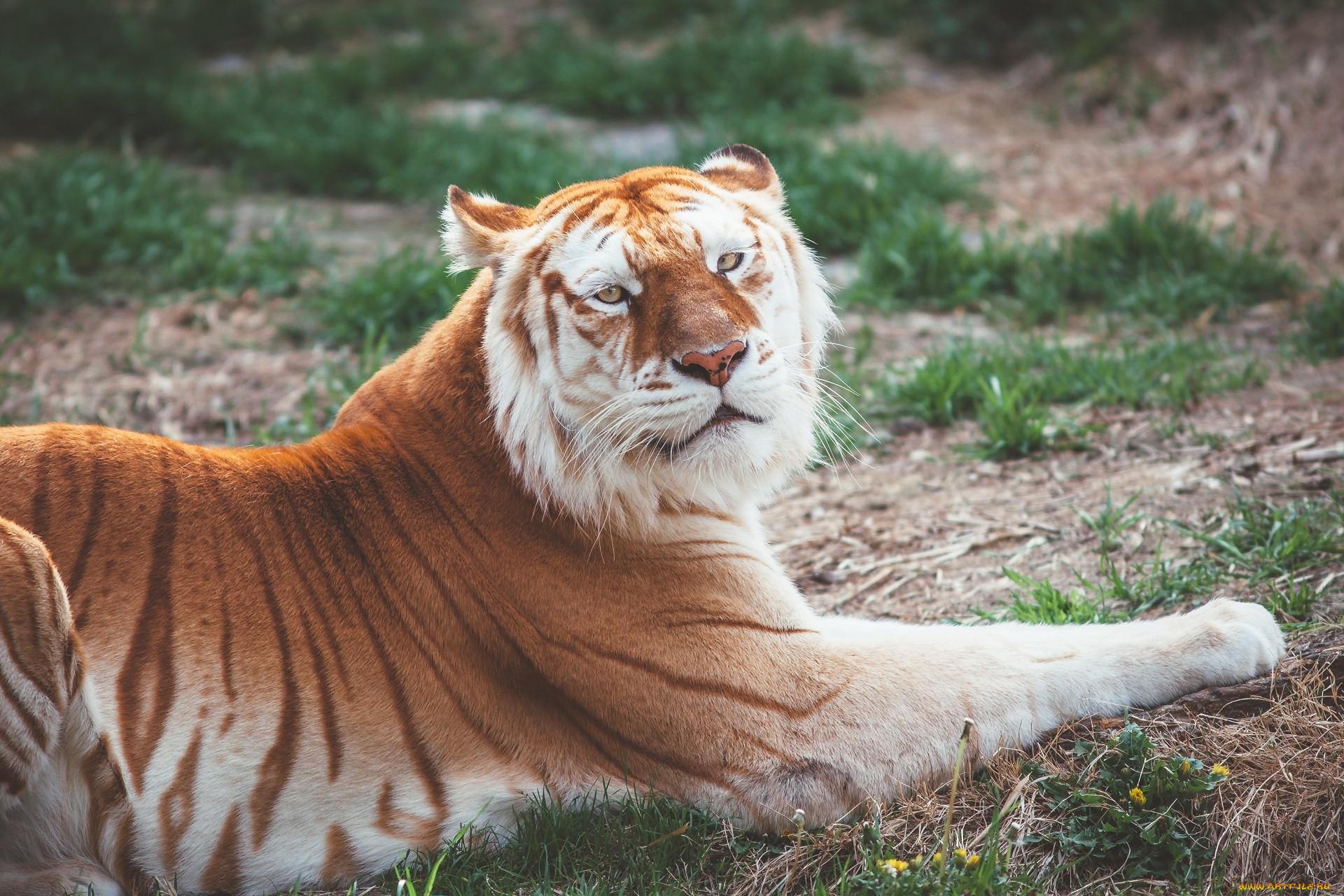Картинка самого редкого животного